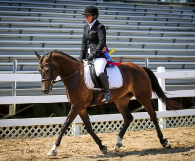 Rosewood Equine Horse Show