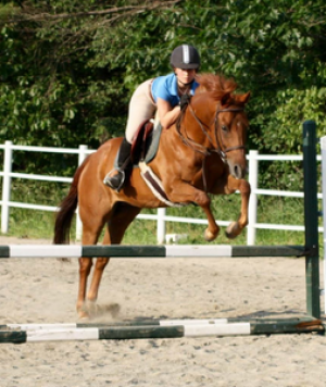 Rosewood Equine Horse for Sale Cash