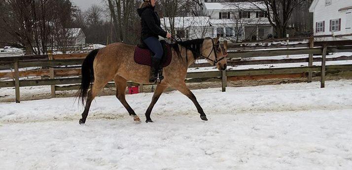 Rosewood Equine Promise